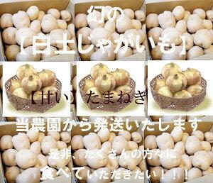 7月下旬より発送!【予約販売】【数量限定】【京都料亭御用達】幻の白土馬鈴薯と長野産有機栽培たまねぎ 3kgお試しセット