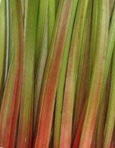 5月下旬ごろより10月末まで【予約販売】ジャムやタルトに!【数量限定】 長野産 生ルバーブ約2k(終盤になると赤がなくなってきます)(7月から9月は緑が多いです)