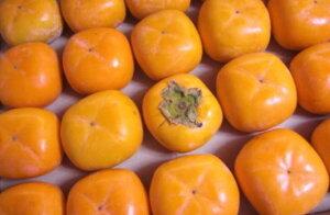 10月中旬ごろより発送!【予約特別価格】【数量限定】長野産 おまかせ甘柿 約1kg