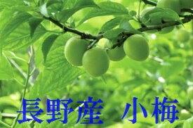 6月より注文順発送!数に限りがあります! 小梅生産量日本一!最安値に挑戦!長野産 小梅(こうめ)約2k(カリカリ梅用の場合はご連絡ください)