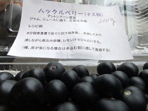 9月より発送!【ジャムや生食に!朝採り即日発送!長野産 ハックルベリ 約250g
