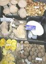キノコの街!信州中野より朝採り新鮮発送!一味違います!長野産 おまかせ きのこ 6種以上セット(高級キノコ 黒…