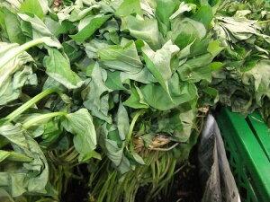5月15日頃より発送!長野より発送します!! さつまいも(シルクスイート)の苗 10株農家さんが使っています!!!(終盤になると葉っぱが枯れてきますが、芽ができきます)(同梱不可)
