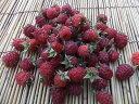 6月下旬から発送!朝採りしたものを冷凍!長野産 冷凍ラズベリー 約450g(葉がとってある場合があります)