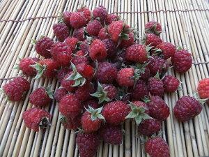 6月下旬から発送!朝採りしたものを冷凍!長野産 冷凍ラズベリー 約420g(葉がとってある場合があります)