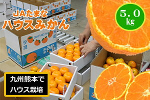 【送料無料】九州の熊本県のたまなのハウスみかん5kg、贈答にも最適