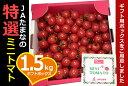 『ミニトマト・ギフト箱1.5kg』全国最大級の生産地・九州熊本・JAたまな厳選品★【人気☆ギフトに最適】★。