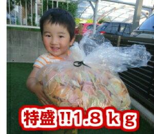 大容量!特盛!!送料無料【大判われせん&お好み煎】どど〜んと1.8kg最安値に挑戦中