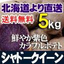 じゃがいも 北海道産 シャドークイーン5kgセット 父の日 贈り物 内祝い お返し ギフト 送料無料 バーベキュー BBQ
