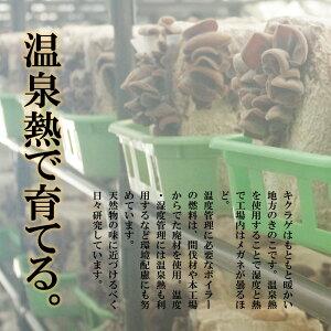 料理が楽しくなる【生きくらげ国産1kg】北海道産無農薬菌床栽培温泉熱利用のプルコリ食感キクラゲ木耳送料無料