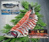 【希少限定品】鮭お歳暮ギフト北海道知床産一等検目近鮭姿2.5〜2.9kg山漬(切身個包装)