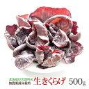 料理が楽しくなる 【 生きくらげ 国産 500g 】 送料無料 無農薬 菌床 栽培 温泉熱利用 キクラゲ 木耳 生 きくらげ 食…