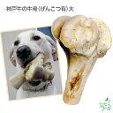 【国産・無添加】神戸牛の牛骨(げんこつ有)大(1本:900g〜)/イリオスマイル/ドッグフード/ドックフード/犬用おや…