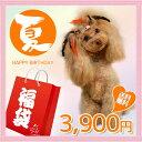 【送料無料】夏のおやつ福袋「サンキューバッグ」/イリオスマイル/福袋