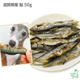 【国産 無添加】滋賀県産 鮎 50g   犬 犬用 おやつ 魚 あゆ アレルギー ドッグフード イリオスマイル