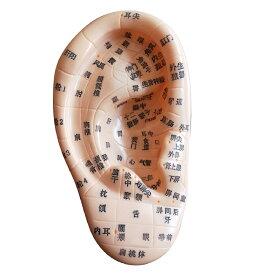 【あす楽】【送料無料】人体模型 ツボ 足 耳 手 鍼灸 つぼ押し 足裏 マッサージ 経穴 経路 整体 (耳)