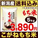 こがねもち米 5kg H28年新潟産【送料無料】(沖縄を除く)