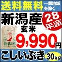 こしいぶき 30kg 玄米 H28年新潟産 米 【送料無料】(一部地域を除く)