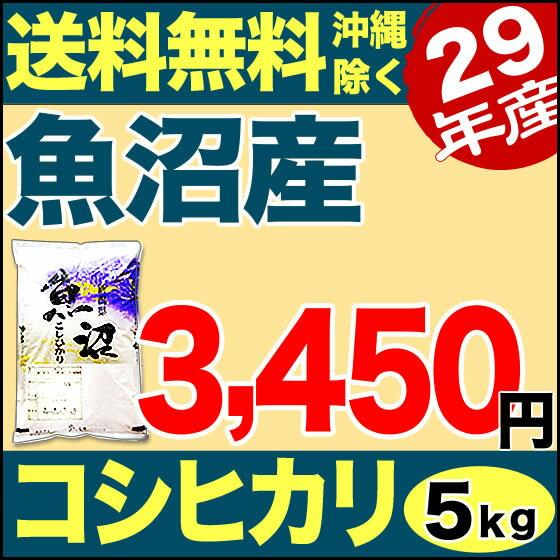 魚沼産コシヒカリ 産直 5kg 29年産 新潟産 米 【送料無料】(沖縄を除く)