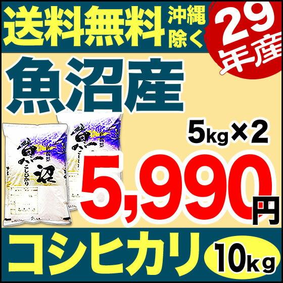 魚沼産コシヒカリ 産直 10kg(5kg×2)  29年産 新潟産 米 【送料無料】(沖縄を除く)