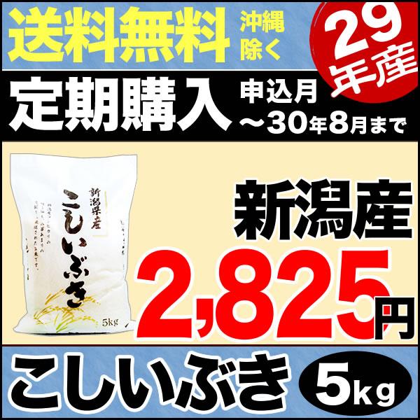 【定期購入】こしいぶき 5kg 29年産 新潟産 米 【送料無料】(沖縄を除く)