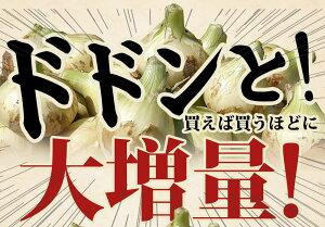 【送料無料】淡路島新玉ねぎ3キロ[Sサイズ〜2Lサイズお任せ]#(訳あり)新たまねぎ3k#