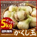 淡路島産高糖度新玉ねぎかくし玉5K #かくし玉5K#新たまねぎ たまねぎ 玉葱 タマネギ