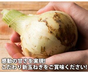 【予約】淡路島産たまねぎ#かくし玉10キロ#【5キロ×2】玉ねぎ玉ネギタマネギ