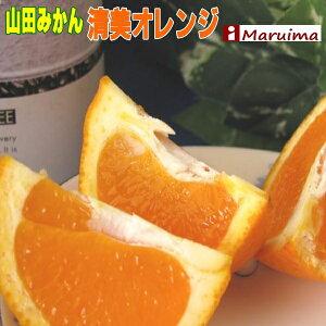 特価! 超濃厚!山田の清見オレンジ2L大玉 5個 送料無料