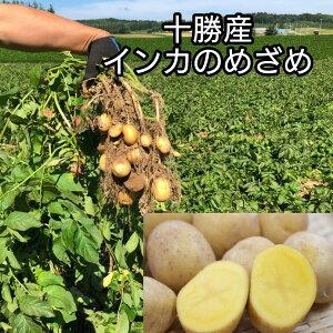 予約販売12月中旬スタート 北海道十勝産インカのめざめ M-Lサイズ5kg ※九州・北海道・沖縄は別途送料 栗のような甘さ じゃが芋 野菜 シチュー カレー スイーツ