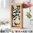 標本 エルビエ フレーム W14×H30×D8 額縁 フラワーインテリア ドライフラワー 花器 標本箱 木製 木目調 造花 お花 …