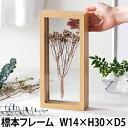 標本 エルビエ フレーム W14×H30×D5 額縁 フラワーインテリア ドライフラワー 花器 標本箱 木製 木目調 造花 お花 …
