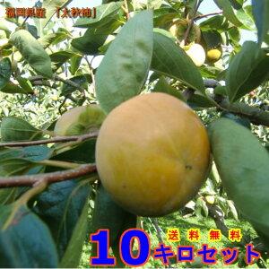 福岡県うきは市浮羽町産 柿 カキ (太秋柿)  Lサイズ          1Kg     果物