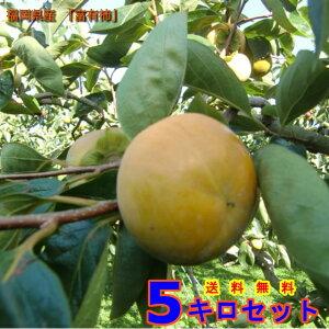 柿 カキ 福岡県うきは市浮羽町産 優良品  (富有柿) Sサイズ 5Kg 果物