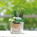 人工観葉植物 消臭アーティフィシャルグリーン ガラス 角型 ( 造花 フェイクグリーン インテリアフラワー アートフラ…