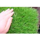 ユニオンビズ 高品質 リアル人工芝 メモリーターフ50mm MT50-0210 2m巾×10m長