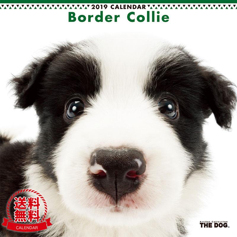 【送料無料】【あす楽】THE DOG 2019年 カレンダー ボーダーコリー