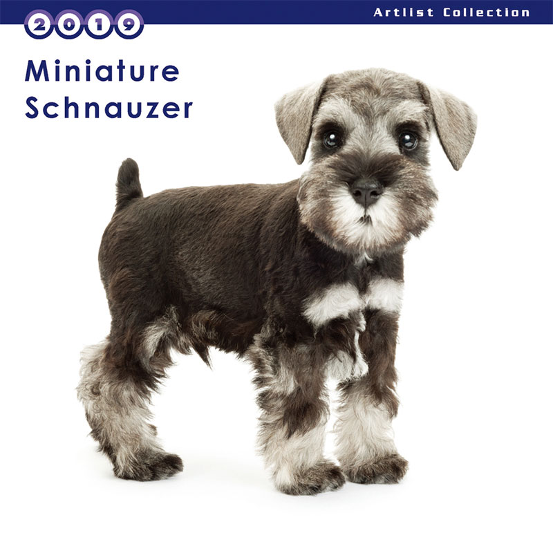 THE DOG 2019年 ミニカレンダー ミニチュアシュナウザー