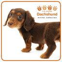 【メール便可】THE DOG 2020年 ミニカレンダー ダックスフンド[犬/ドッグ/ペット/calendar/令和/壁掛け]