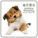 【メール便可】THE DOG 2020年 ミニカレンダー シェットランドシープドッグ[犬/ドッグ/ペット/calendar/令和/壁…