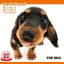 【送料無料】【あす楽】THE DOG 2020年 カレンダー ダックスフンド[犬/ドッグ/ペット/calendar/令和/壁掛け]