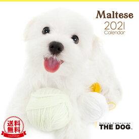 【送料無料】THE DOG 2021年 カレンダー マルチーズ[犬/ドッグ/ペット/calendar/令和/壁掛け]
