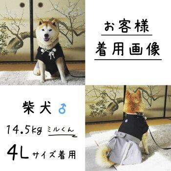 中型犬・柴犬・犬服・着物・袴・七五三・正月・和装ト・コスチューム