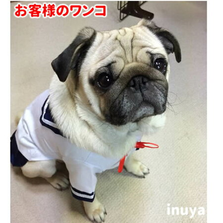 犬服・セーラー服・小型犬用・コスプレ・コスチューム・チワワ