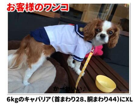 犬服・セーラー服・小型犬用・コスプレ・コスチューム・キャバリア