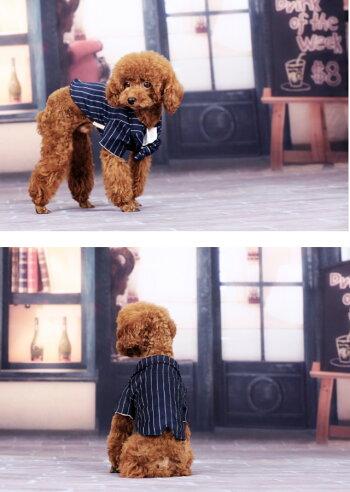 大型犬・コスチューム・ドッグウェア・タキシード