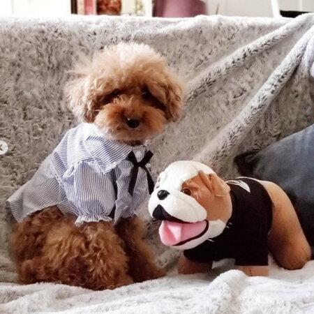 犬服フリルブラウスストライプシャツ小型犬春夏セール
