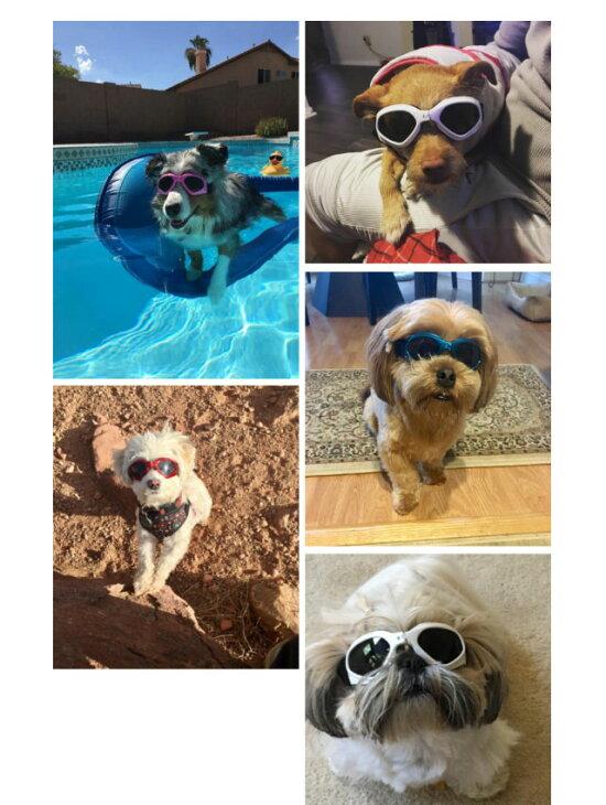 犬用サングラス(あご紐あり)【B】メガネゴーグルアクセサリー小型犬