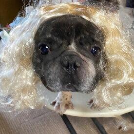 犬猫用 カツラ かつら ウィッグ 女の子用 (金髪) キャップ 帽子変身 かぶりもの ヘアアクセサリー 犬屋 新商品
