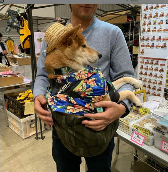 あす楽スリングバッグ4LazyLegsブランド犬猫小型中型犬抱っこひもキャリーバッグ4レイジーレッグス送料無料ポイント10倍